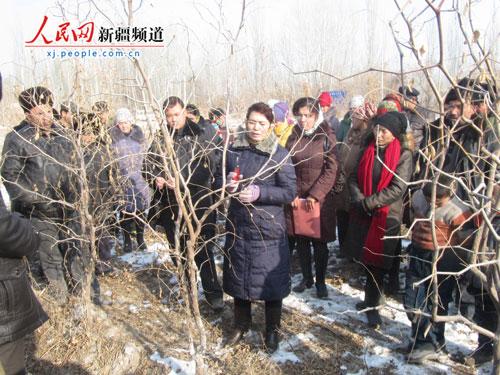 新疆岳普湖变冬闲为冬忙 30多名技术员指导农民修剪枣树