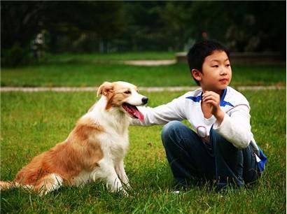孩子因对小动物的关爱培养了自己