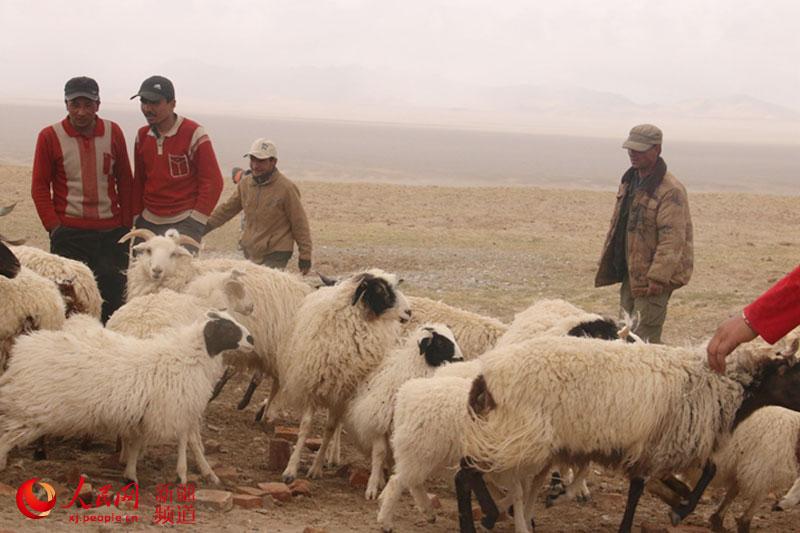 新疆若羌县吾塔木乡:英雄的枣乡牧羊人(图)