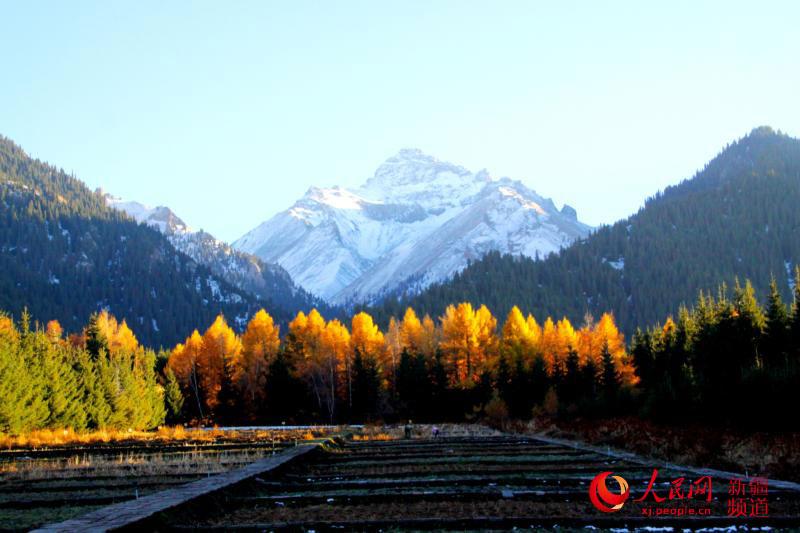 张俊豪)深秋时节,新疆塔城地区乌苏佛山国家森林公园待甫僧景区层林尽