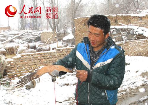 新疆裕民县:一只国家二级保护野生动物红隼获救助