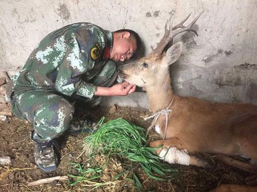 新疆边防官兵救助国家二级保护动物马鹿