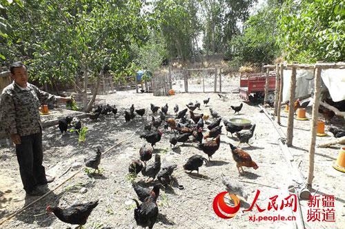 新疆焉耆县2.3万亩小茴香进入采收期(图)同桌小学图片