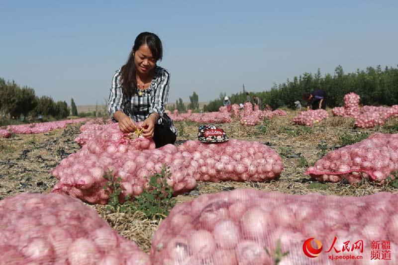 黄油9月23日,新疆焉耆县七个星镇乎尔东村农民在收获字号天热洋葱打发图片