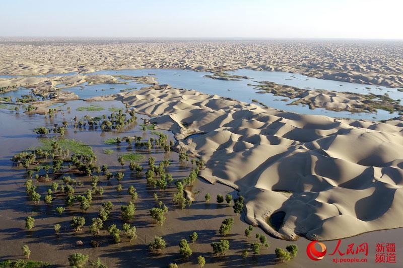 塔里木河中国第一大内流河,是新疆的母亲河, 全长2137千米,它由叶尔羌河、和田河、阿克苏河等汇合而成,塔里木河自西向东绕塔克拉玛干大沙漠贯穿塔里木盆地,流域面积19.8万平方千米,最后流入台特马湖。 每年的七、八、九月份,由于气温高,降水较多,加上天山、昆仑山的冰雪融水导致塔里木河水量增多,新疆的塔里木河进入汛期。汛期的塔里木河像一匹无疆的野马奔腾咆哮着穿行在万里荒漠和草原上,滋润着这里的胡杨、红柳等植被,为恢复新疆南部的荒漠生态,起到了巨大作用,图为拍摄于塔里木河下游的新疆巴音郭楞蒙古自治州尉犁县境