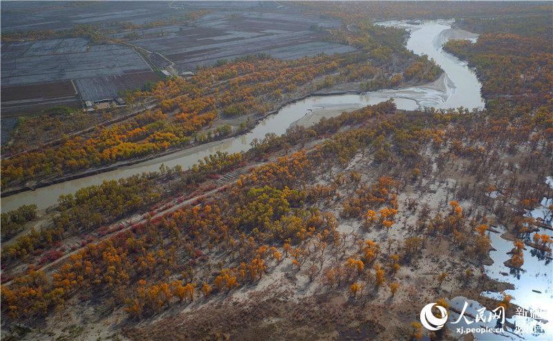面积最大、保存最完整、最原始的原始胡杨林?-新疆塔里木河两岸胡