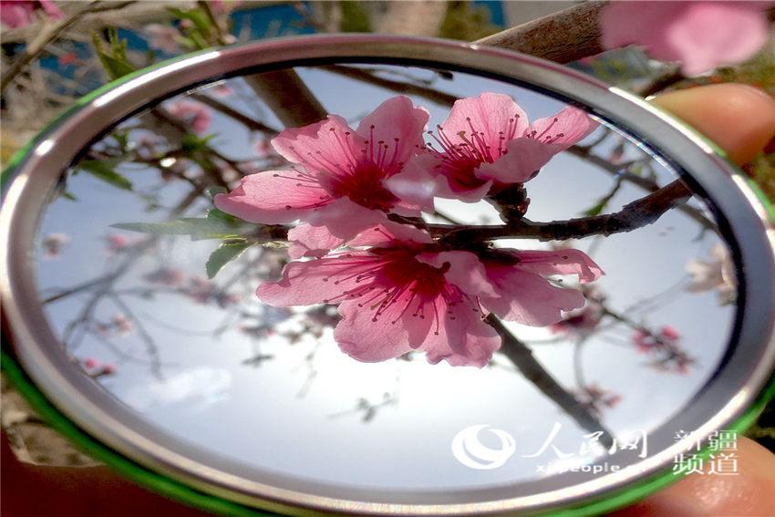 新疆:镜中寻春(组图)