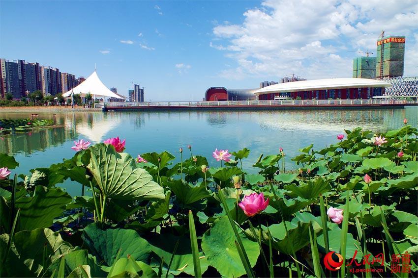 盛夏时节,新疆库尔勒市天鹅河畔的荷花迎来了盛花期。站在田园桥上放眼望去,水波粼粼,荷花点点,河面上溢满了绿叶红花。千姿百态的荷花,争妍斗艳,风姿优雅,妩媚动人:有的花骨朵像是害羞的婴儿脸涨得通红,有的像纤长秀美的少女亭亭玉立于莹莹碧波中。多种多样的荷花,白的似雪,粉的似霞,淡淡的清香扑鼻而来,沁人肺腑。圆而大的荷叶像是插在水中的翡翠盘,白云悠悠,小鸟歌唱,鱼儿在荷叶下游动玩耍。阳光下,清澈的湖水与纯洁的荷花交相辉映,构成了夏季里大漠边城一幅高雅素洁的塞外江南水墨风景画。(杨厚伟)