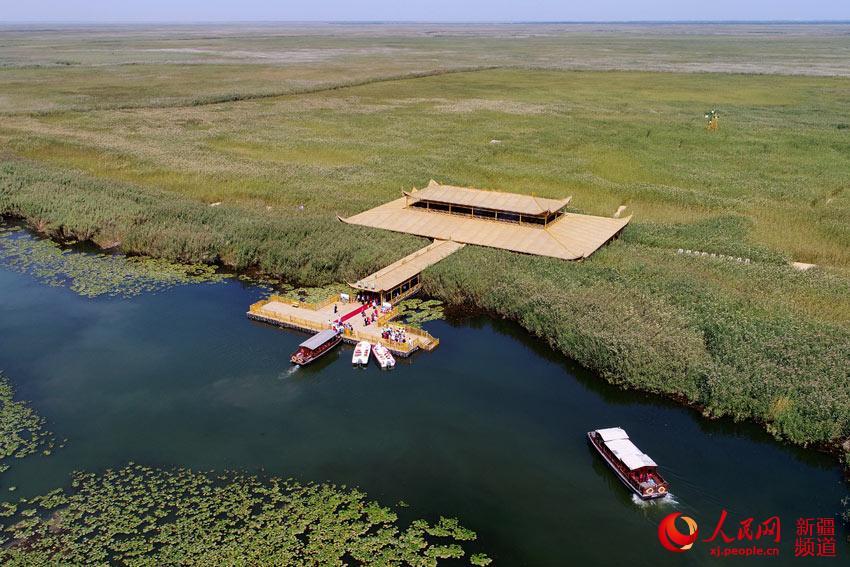 博斯腾湖边上的阿洪口莲海世界景区,在碧水蓝天的映衬下,金黄的芦苇一