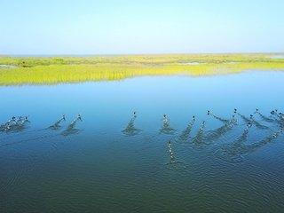 塔河下游生态输水水头7天到达台特玛湖