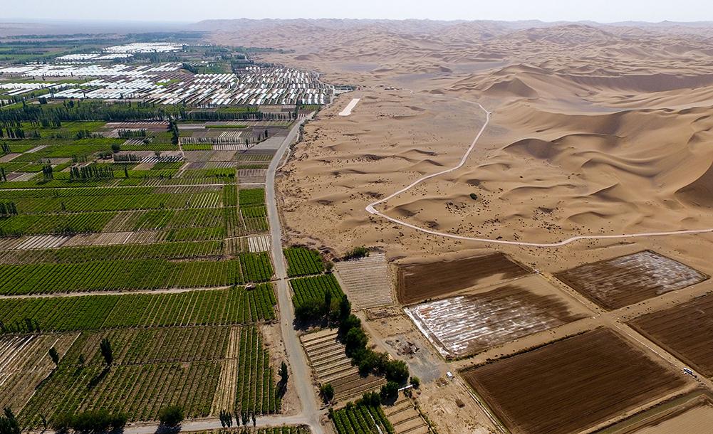 新疆:种稻沙山下(图)