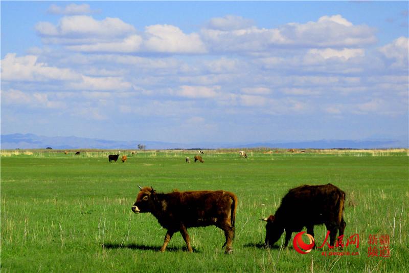 新疆库鲁斯台草原初夏风景美如画