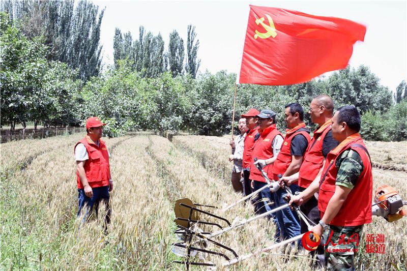 新疆和田:共产党员服务队助力夏收暖人心(组图)