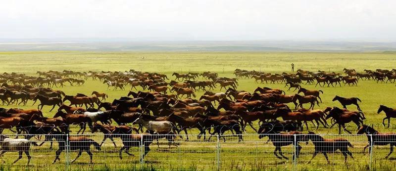2018中国新疆伊犁天马国际旅游节将于7月16日拉开帷幕