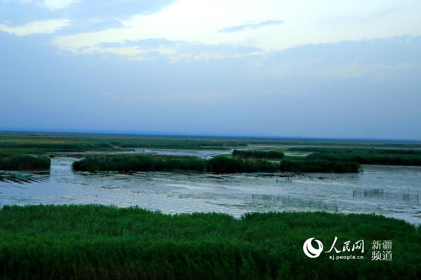 """在博斯腾湖""""莲海世界""""风景区内,怡人的生态美景让人如在诗情画意之中."""