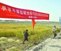 岳普湖:海水稻喜获丰收   全国首批耐盐碱水稻试种试验点之一的新疆岳普湖县海水稻获得丰收。