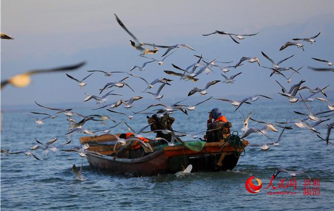 新疆博斯腾湖:鱼虾满仓丰收归(图)