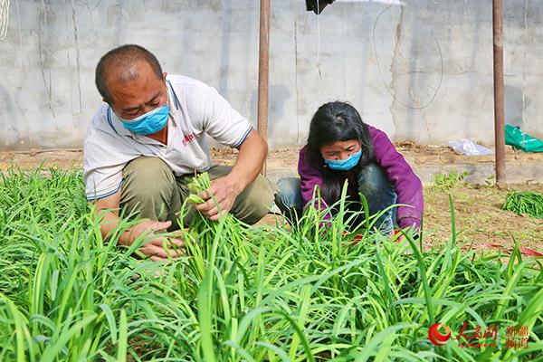 新疆若羌縣:大棚蔬菜種植掀起春