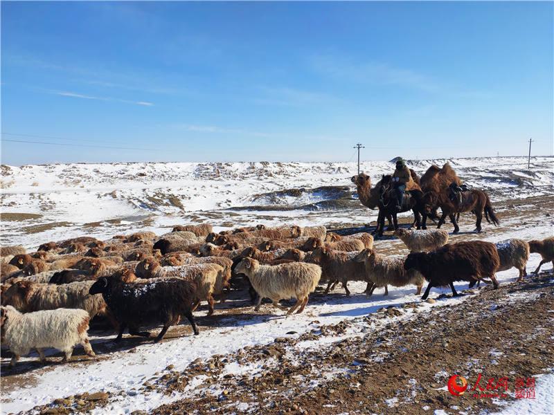 新疆:牧民转场正当时(组图)