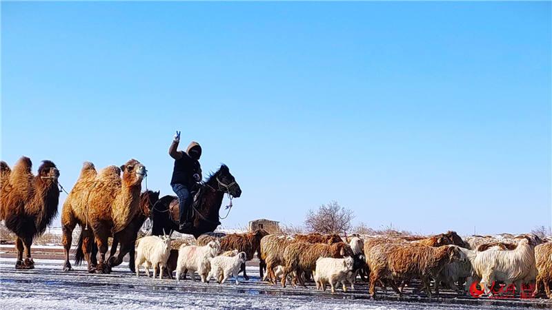 新疆:牧民转场正当时(组图)【4】