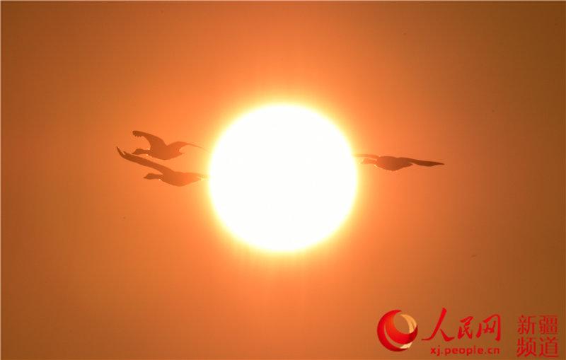 新疆巴音布魯克濕地進入候鳥遷徙高峰期(組圖)【9】