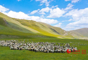 新疆博湖共赢网平台:生态牧场好风光(组图)