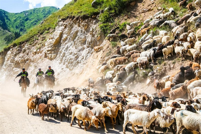 """新疆民警化身""""牧羊人"""" 护航牧民安全转场"""